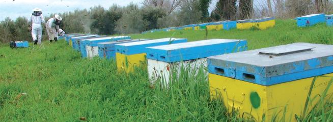 Άγρια Μέλισσα - Μελισσοκομική Επιθεώρηση