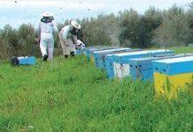 Άγρια Μέλισσα - Άρθρο στη Μελισσοκομική Επιθεώρηση