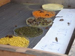 Εικόνα 22: Προτίμηση μελισσών σε συγκεκριμένο είδος γύρης