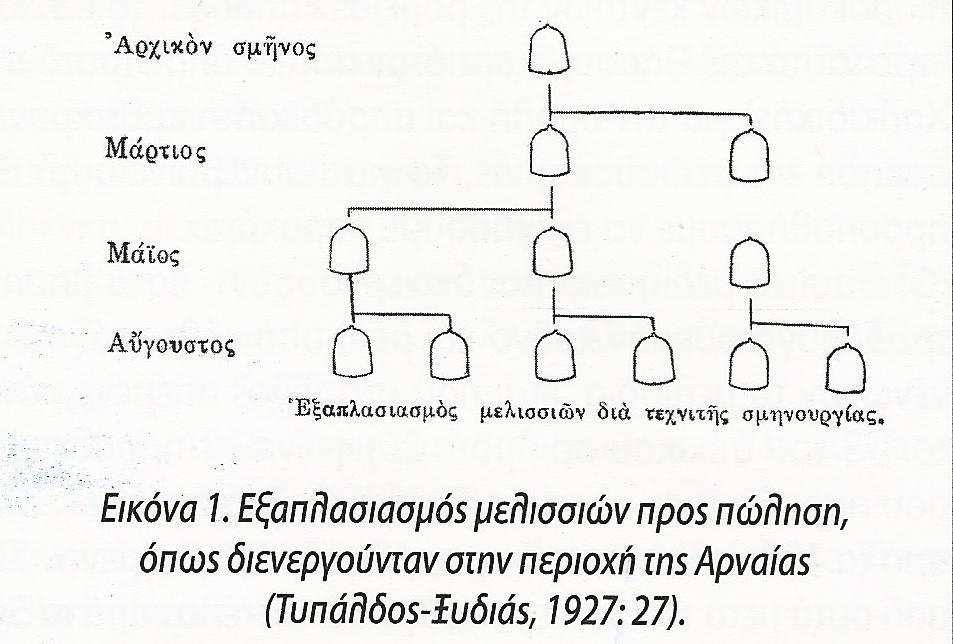 Η αναπαραγωγική μελισσοκομία της Χαλκιδικής 1. Γ Μαυροφρύδης