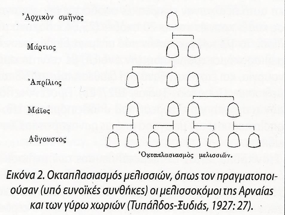 Η αναπαραγωγική μελισσοκομία της Χαλκιδικής 2. Γ Μαυροφρύδης