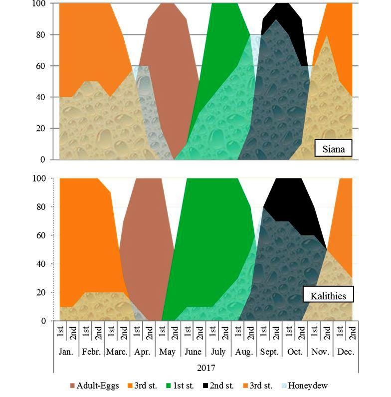 Ενδεικτική διαφοροποίηση στον βιολογικό κύκλο του Marchalina μεταξύ βορειοδυτικού (πρώιμος) και νοτιοανατολικού (όψιμος) άκρου του νησιού