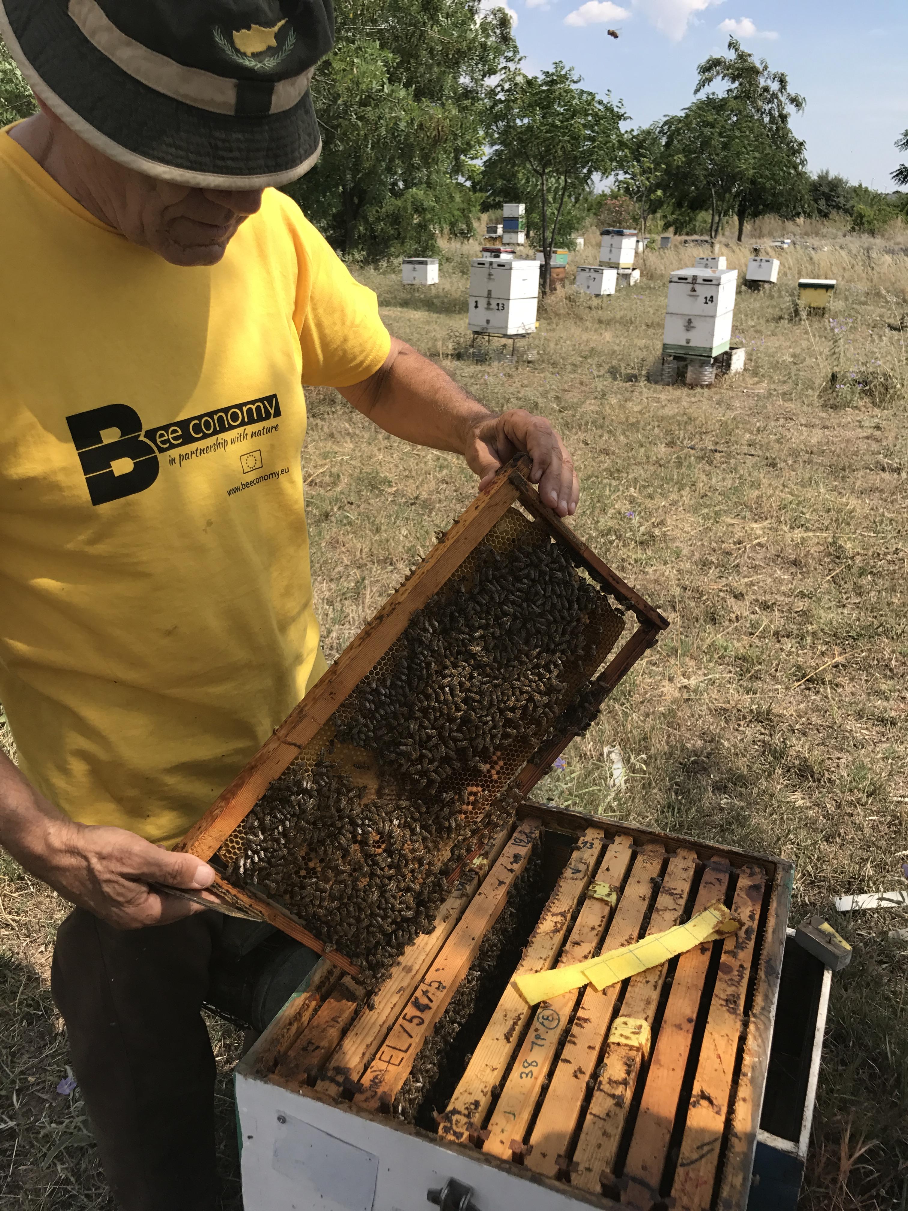 Εικόνα 10 : Παραμόρφωση κηρηθρών στα σημεία επαφής της κηρήθρας, αναμενόμενη συμπεριφορά των μελισσών
