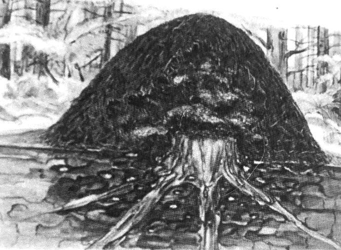 Εικ. 1. Μυρμηγκοφωλιά (επίγειο μέρος) από F. Polyktena