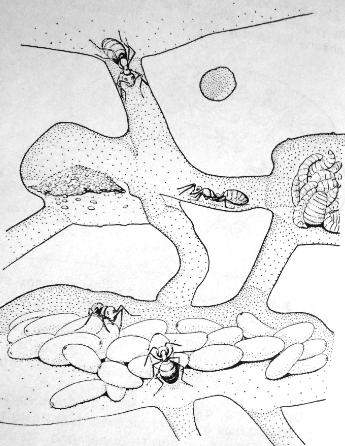 Σχ. 2. Εσωτερικό Μυρμηγκοφωλιάς