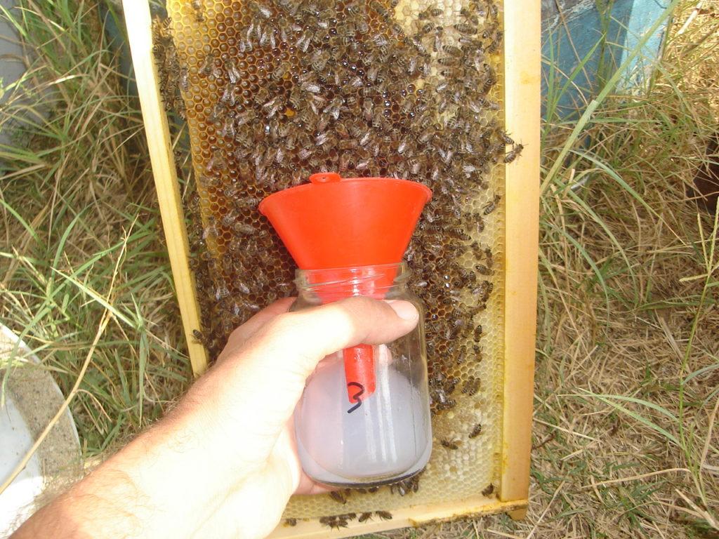 Εικ. 1. Με ένα μικρό χωνί διευκολύνεται σημαντικά η συλλογή των μελισσών
