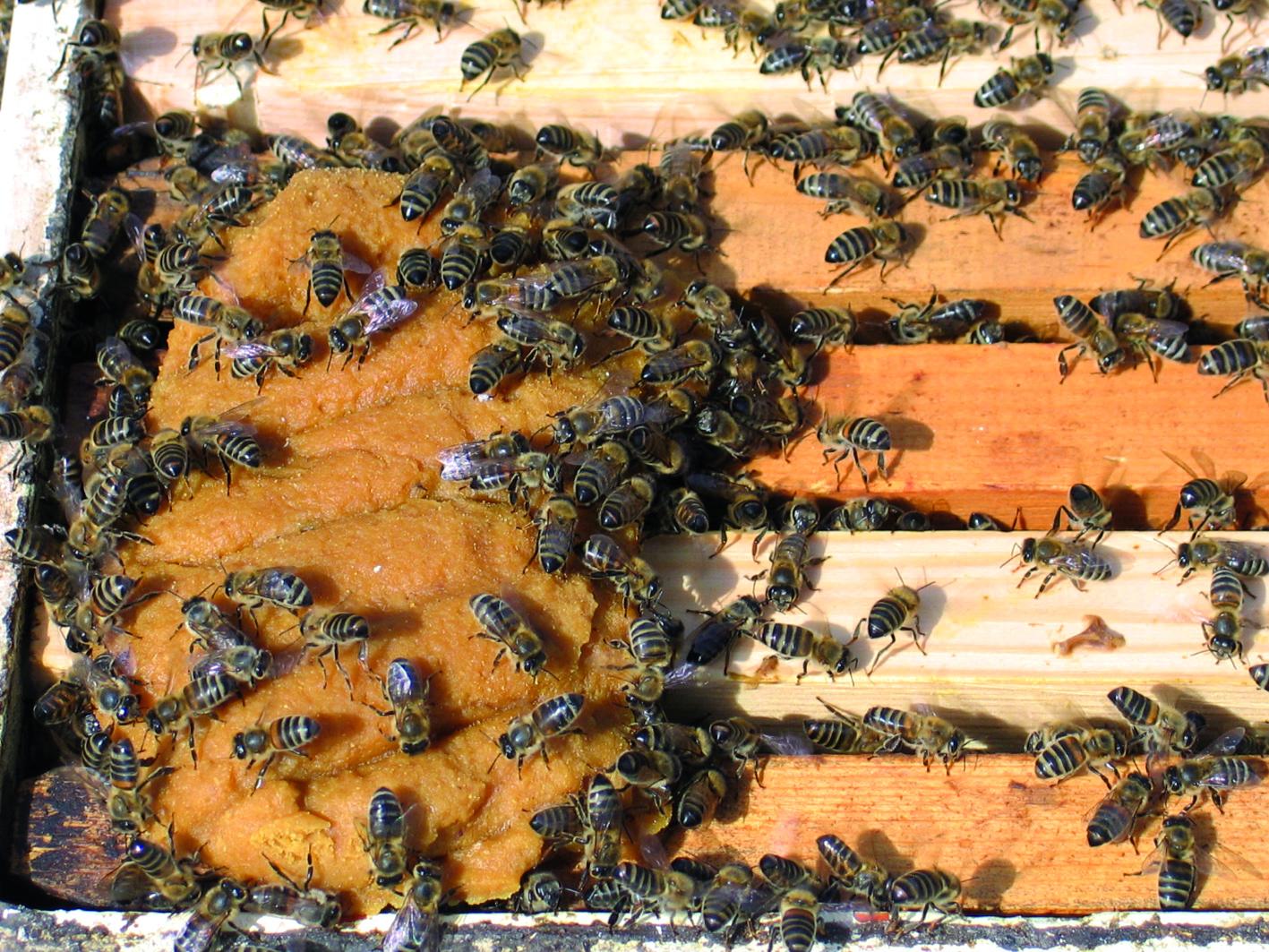 Εικόνα 5. Ένα υποκατάστατο γύρης πρέπει να είναι ελκυστικό στη μέλισσα και να έχει υψηλή θρεπτική αξία.